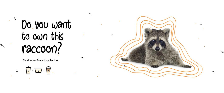The Soy Inc's Raccoon